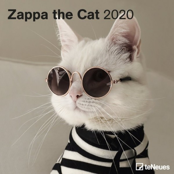 Zappa the Cat 2020